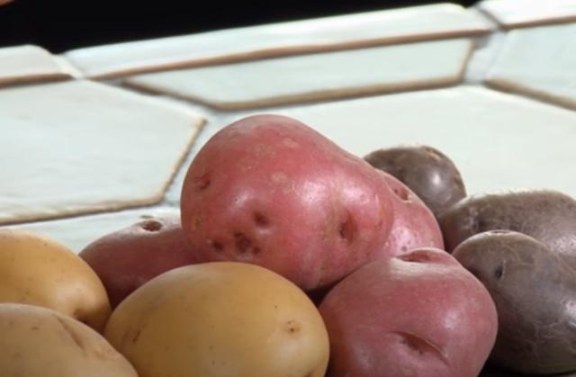 krompir u frizideru